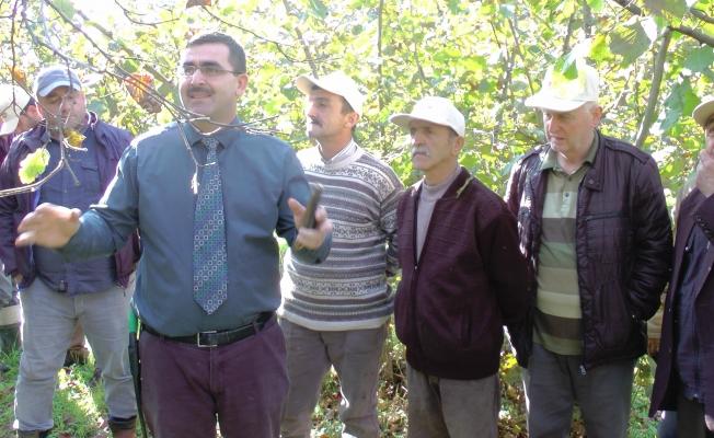 Yarıcı Fındık üreticisine tarlada uygulamalı eğitim