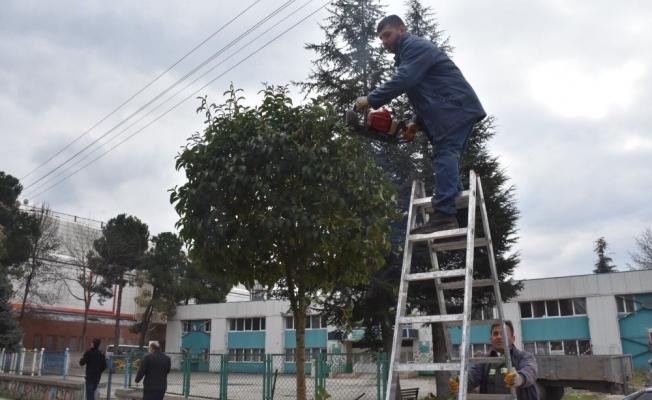 Düzce'de ağaçların kışlık bakımı yapılıyor