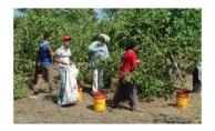 Mevsimlik işçilerin çocukları için kurslar açılacak